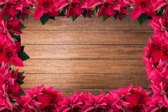 红色圣诞节一品红花框架 免版税图库摄影