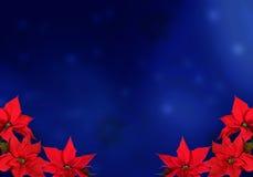 红色圣诞节的一品红 免版税库存照片