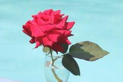 红色在一个蓝色背景特写镜头的玫瑰花 图库摄影