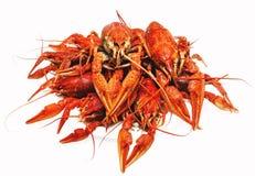 红色在白色背景的煮沸的小龙虾 免版税库存照片