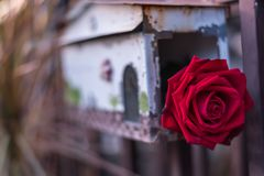 红色在邮箱的玫瑰花在情人节 库存照片