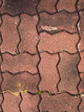 红色块路面纹理 库存图片