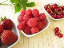 红色夏天莓果 库存图片