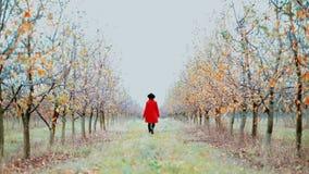红色外套和帽子的妇女单独走在树之间的在苹果庭院里在秋天季节 女孩去向前远离照相机 股票录像