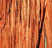 红色外皮木头 免版税库存照片