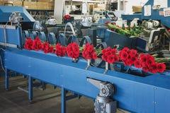 红色大丁草准备在装配线被包装 免版税库存图片