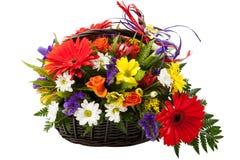 红色大丁草花。 免版税库存图片