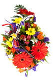 红色大丁草花。 库存图片