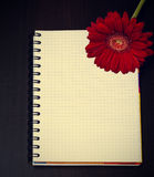 红色大丁草花和笔记本在木书桌上 免版税库存照片