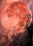 红色大月亮和树剪影 图库摄影