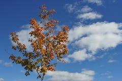 红色天空叶子 库存图片