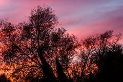 红色天空通过树 库存照片