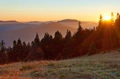 红色太阳设置光芒在杉木,云杉的树中的 免版税库存照片