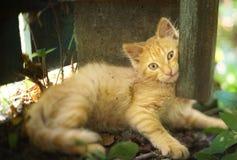 红色头发小猫在夏天庭院的地面放置 库存照片