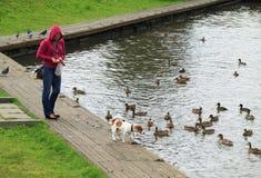 红色夹克的女孩在与狗的步行喂养鸭子 图库摄影