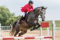 红色夹克的女骑士跳一匹软羊皮的马 免版税库存图片
