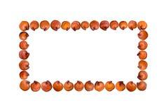 红色奎奴亚藜长方形形状 向量例证
