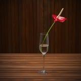 红色安祖花(彩斑芋;男孩花)在玻璃花瓶求爱 库存图片