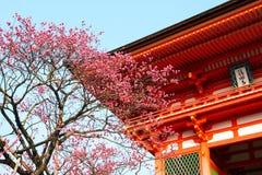 红色寺庙和日本樱花在蓝天backgroun 库存照片