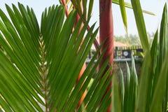 红色封印棕榈 库存照片