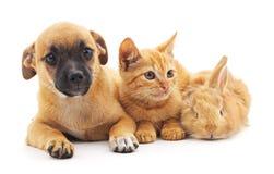 红色小狗、小猫和兔宝宝 免版税库存照片