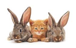 红色小猫和兔宝宝 免版税库存照片