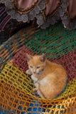 红色小猫在一个篮子的待售在奇奇卡斯特南戈市场上 免版税库存照片