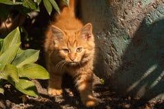 红色小猫在庭院里 免版税库存图片