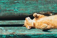 红色小猫猫在一条长凳睡觉在公园 图库摄影
