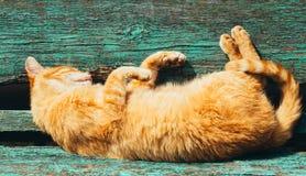 红色小猫猫在一条长凳睡觉在公园 免版税库存图片