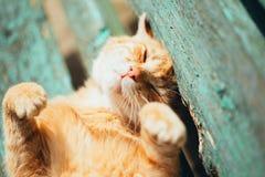 红色小猫猫在一条长凳睡觉在公园 免版税图库摄影