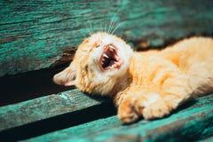 红色小猫猫在一条长凳睡觉在公园 库存图片