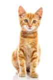 红色小的猫 免版税图库摄影