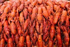 红色小龙虾 图库摄影