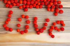 从红色山脉灰的莓果的词爱 免版税库存图片
