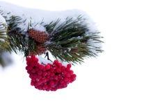 红色山脉灰莓果圣诞树装饰品 库存图片