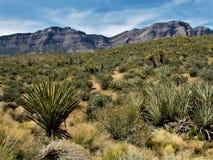 红色岩石全国保护地区 库存图片