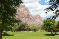 红色岩石和绿色在沙漠 免版税图库摄影