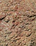 红色岩石纹理 库存图片