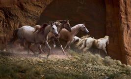 红色岩石赛跑者 免版税库存图片