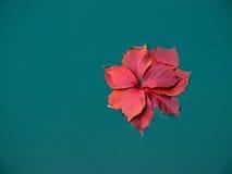 红色干叶子在水中 免版税库存照片
