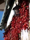 红色干的胡椒 库存照片