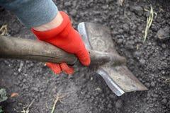 红色庭院手套的人开掘与铁锹的 免版税库存照片