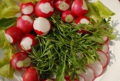 红色庭院萝卜和芝麻菜沙拉 免版税库存照片
