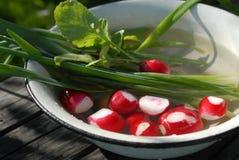 红色庭院萝卜和葱 免版税图库摄影