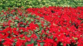红色庭院 库存图片