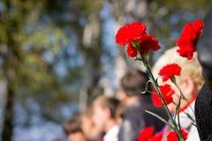 红色康乃馨在人的手上,来到纪念仪式 免版税图库摄影