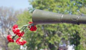 红色康乃馨花 库存照片