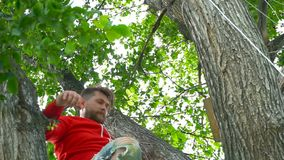 红色开会的凉快的人在树 股票录像