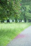 红色开花的七叶树 库存照片